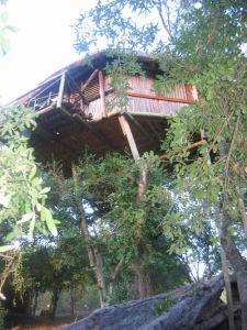Treehouse5b